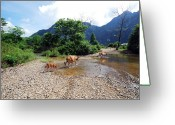 Livestock Greeting Cards - Cows Crossing River In Vietnam Greeting Card by Thepurpledoor