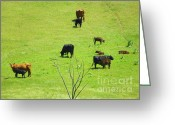 Feeding Mixed Media Greeting Cards - Cows Grazing and Feeding their Young - On the Field Greeting Card by Photography Moments - Sandi