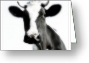 Landscape Posters Greeting Cards - Cows landscape photograph I Greeting Card by Marco Hietberg
