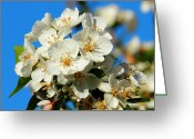 Anther Greeting Cards - Crab Apple Blossom Macro 001 Greeting Card by Lance Vaughn