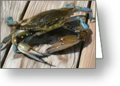 Ocean Beach Greeting Cards - Crabbie Greeting Card by Patti Siehien