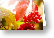 Cranberries Greeting Cards - Cranberry Bliss Greeting Card by Matt Dobson