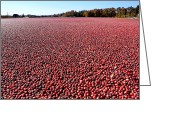Cranberries Greeting Cards - Cranberry Bog in New Jersey Greeting Card by Olivier Le Queinec