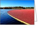 Cranberries Greeting Cards - Cranberry Harvest in New Jersey Greeting Card by Olivier Le Queinec
