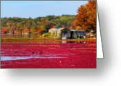 Cranberries Greeting Cards - Cranberry Juice Greeting Card by Gina Cormier