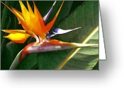 James Temple Greeting Cards - Crane Flower Greeting Card by James Temple