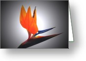 Bird Of Paradise Greeting Cards - Crane Flower Portrait Greeting Card by Terence Davis
