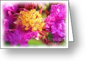 Morning Mist Images Greeting Cards - Crape Myrtle Greeting Card by Judi Bagwell
