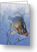 Lake Greeting Cards - Crappie Cover Tangle Greeting Card by JQ Licensing