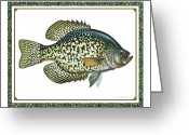 Pan Greeting Cards - Crappie Print Greeting Card by JQ Licensing