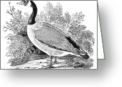 Cravat Greeting Cards - Cravat Goose Greeting Card by Granger