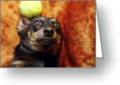 Lazy Dogs Greeting Cards - Crazy Daschund Greeting Card by Angel  Tarantella