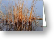 Wild Rivers Greeting Cards - Creations Illusion Greeting Card by Steven Milner