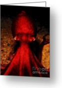Mediterranian Greeting Cards - Creatures of The Deep - The Octopus - v4 - Red Greeting Card by Wingsdomain Art and Photography