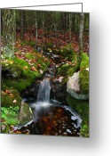 New England Autumn Greeting Cards - Creek Acadia National Park Greeting Card by Juergen Roth