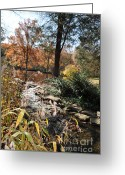 Cheekwood Gardens Greeting Cards - Creek Greeting Card by Denise Ellis