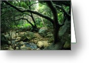 Landscapes Framed Prints Greeting Cards - Creek in Woods Greeting Card by Kathy Yates
