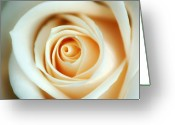Creme Greeting Cards - Creme Rose Greeting Card by Mandy Wiltse