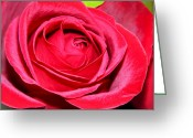 Rosaceae Greeting Cards - Crimson Red Rose Greeting Card by Karon Melillo DeVega