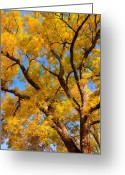 James Insogna Greeting Cards - Crisp Autumn Day Greeting Card by James Bo Insogna