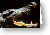 Fathers Greeting Cards - Crocodile Greeting Card by Scott Hovind