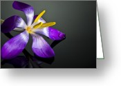 Purple Flower Greeting Cards - Crocus Greeting Card by Svetlana Sewell