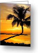 Wiles Greeting Cards - Crooked Palm Greeting Card by Karen Wiles