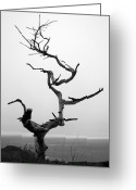 Barry Greeting Cards - Crooked Tree Greeting Card by Matt Hanson