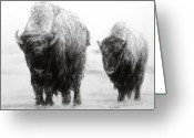 National Drawings Greeting Cards - Crossing Yellowstone Greeting Card by Meagan  Visser