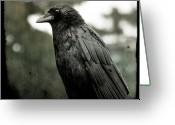 Passerines Greeting Cards - Crow In the Summer Rain Greeting Card by Gothicolors With Crows