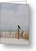 Carolina Greeting Cards - Crow On Dune Fence Greeting Card by Kelley Nelson