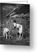 Charolais Greeting Cards - Crowded Irish Rural House Greeting Card by Joe Fox