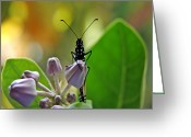 Flower Buds Greeting Cards - Crown Flower 3D Greeting Card by Kevin Smith