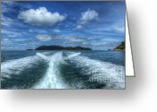 Rain Forest Greeting Cards - Cruising Greeting Card by Adrian Evans