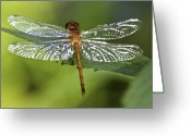Dragonfly Greeting Cards - Crystal Wings Greeting Card by Evelina Kremsdorf