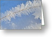 Bob Berwyn Greeting Cards - Crystalline Morning Greeting Card by Bob Berwyn