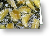 James Temple Greeting Cards - Crystallized Ginger Greeting Card by James Temple
