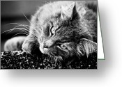 Hakon Greeting Cards - Cuddly Cat Greeting Card by Hakon Soreide