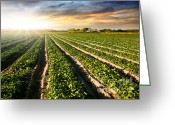 Crops Greeting Cards - Cultivated Land Greeting Card by Carlos Caetano