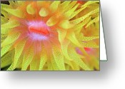 Cup Photo Greeting Cards - Cup Coral Greeting Card by Copyright Michael Gerber