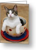 Fine Art Cat Greeting Cards - Cup O Tilly 1 Greeting Card by Andee Photography