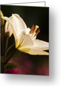 Wildflower Fine Art Greeting Cards - Cupids Arrow Greeting Card by Jeffrey Campbell