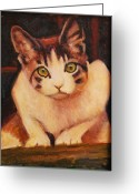 Calico Cat Greeting Cards - Curiosity Greeting Card by Billie Colson