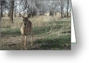 Fawns Greeting Cards - Curiosity Greeting Card by Ernie Echols