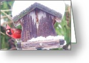 Cardinals. Wildlife. Nature. Photography Greeting Cards - Curious Cardinal Greeting Card by Dave Dresser