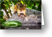 Chipmunk Greeting Cards - Curious Chipmunk  Greeting Card by Bob Orsillo