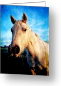 Horse Greeting Cards Greeting Cards - Curious Horse Greeting Card by Toni Hopper