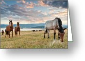 Dam Greeting Cards - Curious Horses Greeting Card by Evgeni Dinev