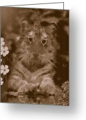 Smudgeart Greeting Cards - Curious Kitty Greeting Card by Madeline M Allen