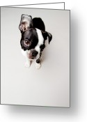 Brown Eyes Greeting Cards - Curious Greeting Card by Square Dog Photography